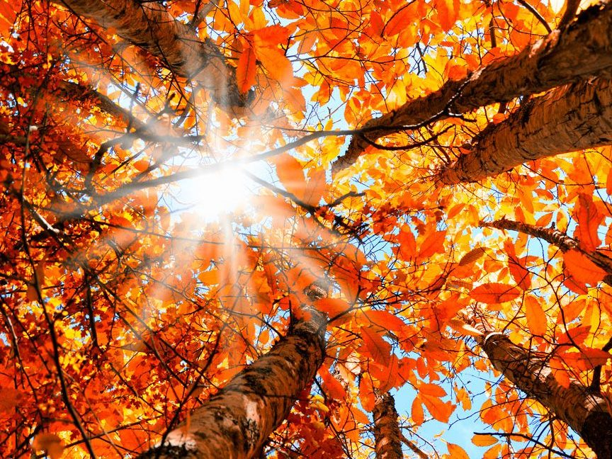 Istentisztelet 2018. szeptember 23-án vasárnap de. 11h és du. 3h